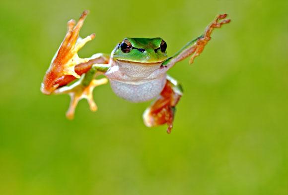 frog_main.jpg