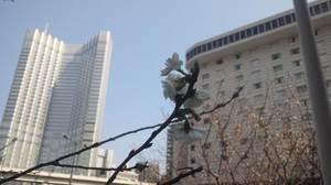 春と桜とクラウドサービス